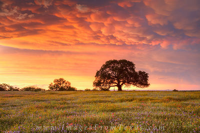 texas landscapes,texas wildflower photos,texas sky images,wildflower prints,texas photos