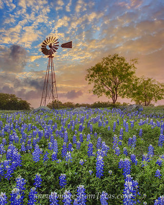 bluebonnets,windmill,texas hill country,texas sunrise,bluebonnets and windmill,texas landscapes,texas wildflowers