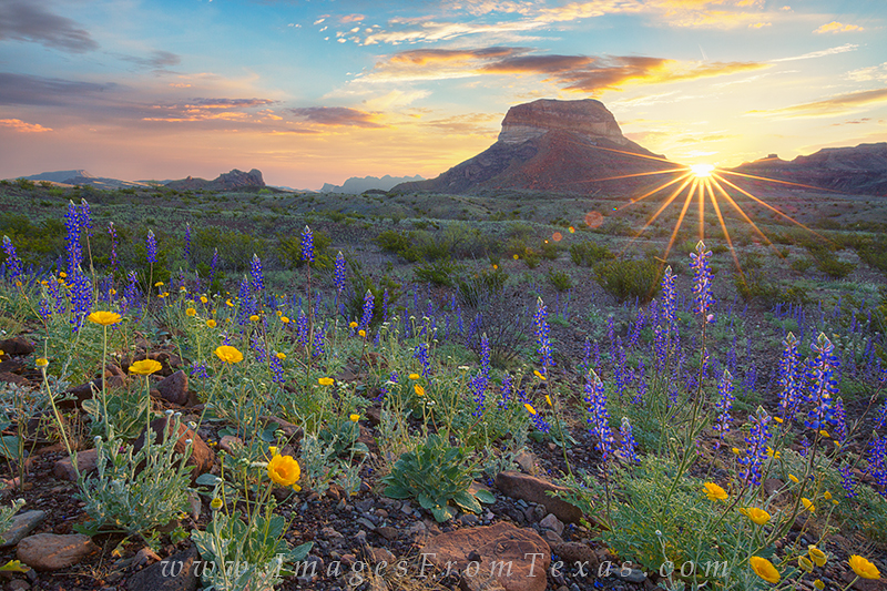 big bend, bluebonnets, texas wildflowers, texas landscapes, sunrise