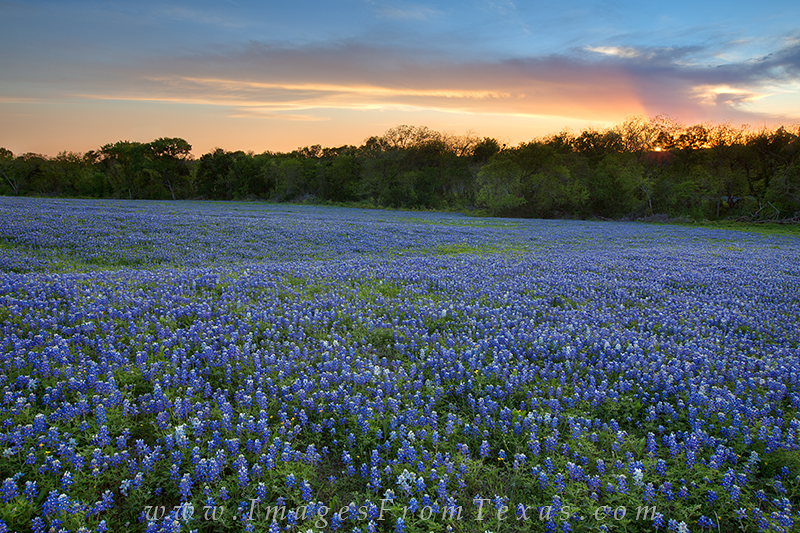 Bluebonnets Texas Hill Country Sunset 2017 2018 Best