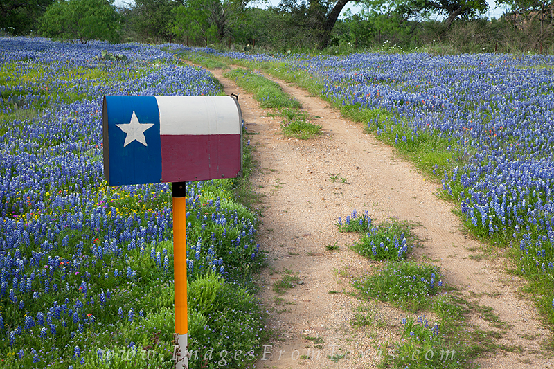 Bluebonnet images,bluebonnet photos,bluebonnet pictures,texas wildflower images,texas wildflower pictures,texas wildflower photos,texas wildflowers texas bluebonnets,bluebonnets,bluebonnet,blue bonnet, photo