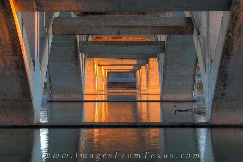 austin images,lady bird lake photos,lady bird lake,austin swan,lamar bridge,austin bridges, photo