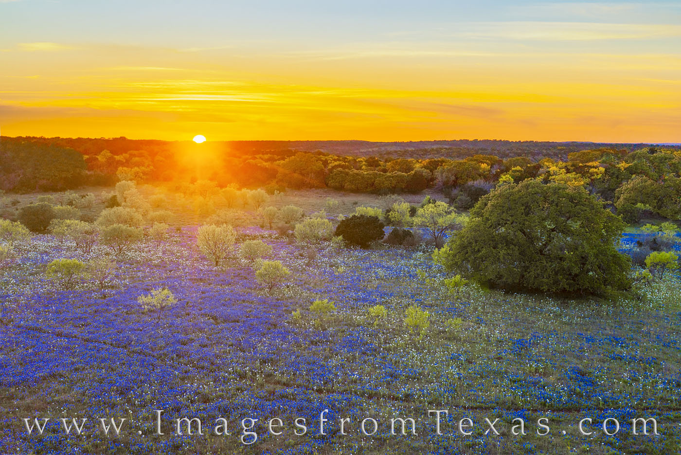 bluebonnets, aerial, drone, hill country, sunset, evening, dirt road, rural, peace, poppies, photo
