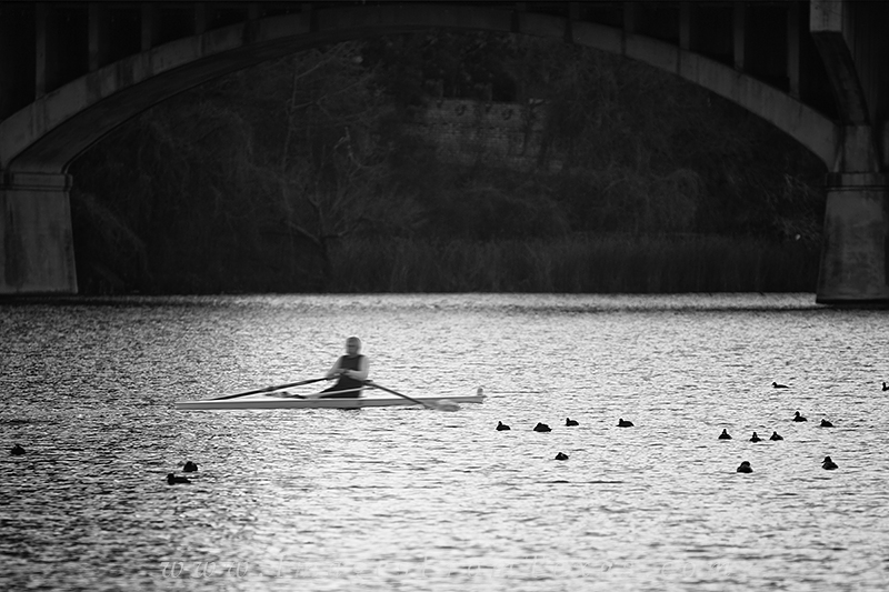 black and white,austin black and white,lady bird lake,zilker park,congress bridge, photo