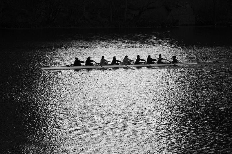 Early risers practice their art of sculling on a cold winter morning in this black and white image of Lady Bird Lake in Austin...