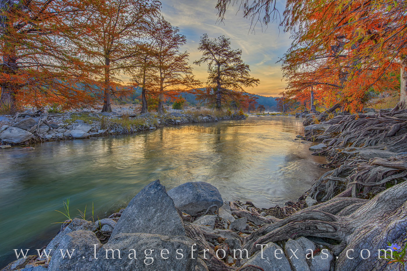 Cypress seem to glow in the morning light along the Pedernales River on a cold fall morning in November.. This location is one...