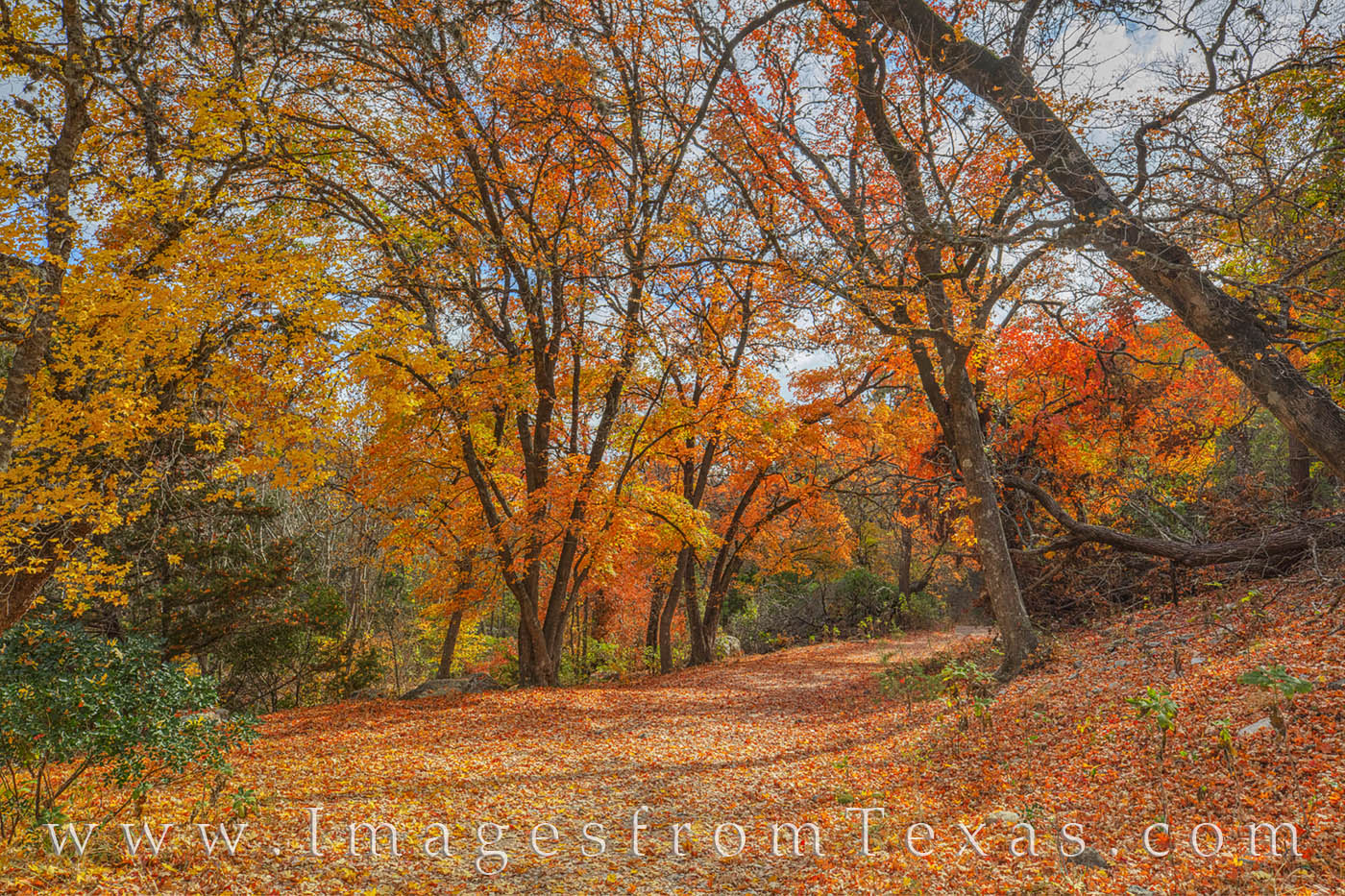 lost maples, lost maples prints, east-west trail, fall, autumn, texas state parks, maples trees