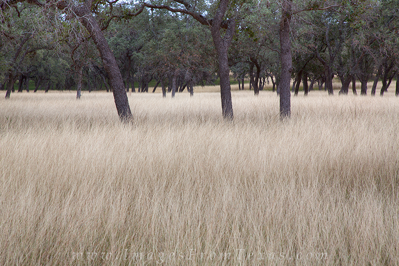 A pasture in Bandara Country shows the winter grasses that grow in the fields and pasture