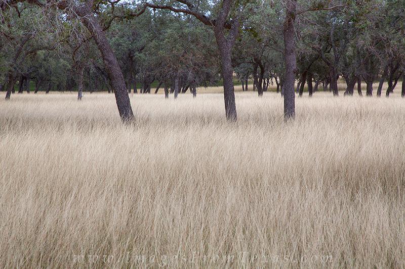 bandera county,november grasses,texas hill country, photo