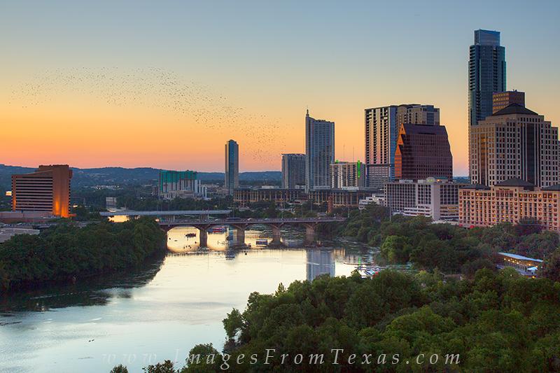 austin bats,austin skyline bats,austin skyline,congress bats,bats,austin texas, photo