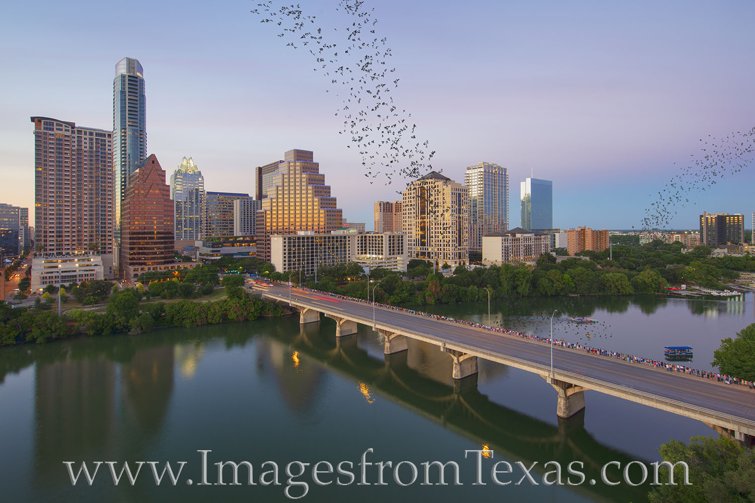 bats, austin, congress avenue, summer, sunset, bat watching, tourism, visitors, icon, austonian, frost tower, photo