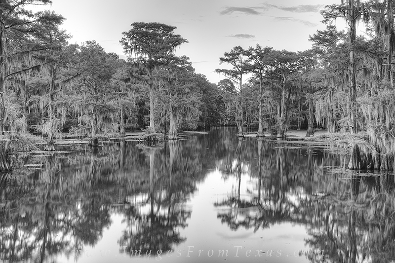In the evening after the sun has settled below the horizon, the swamps and bayous of Caddo Lake are still. This black and white...