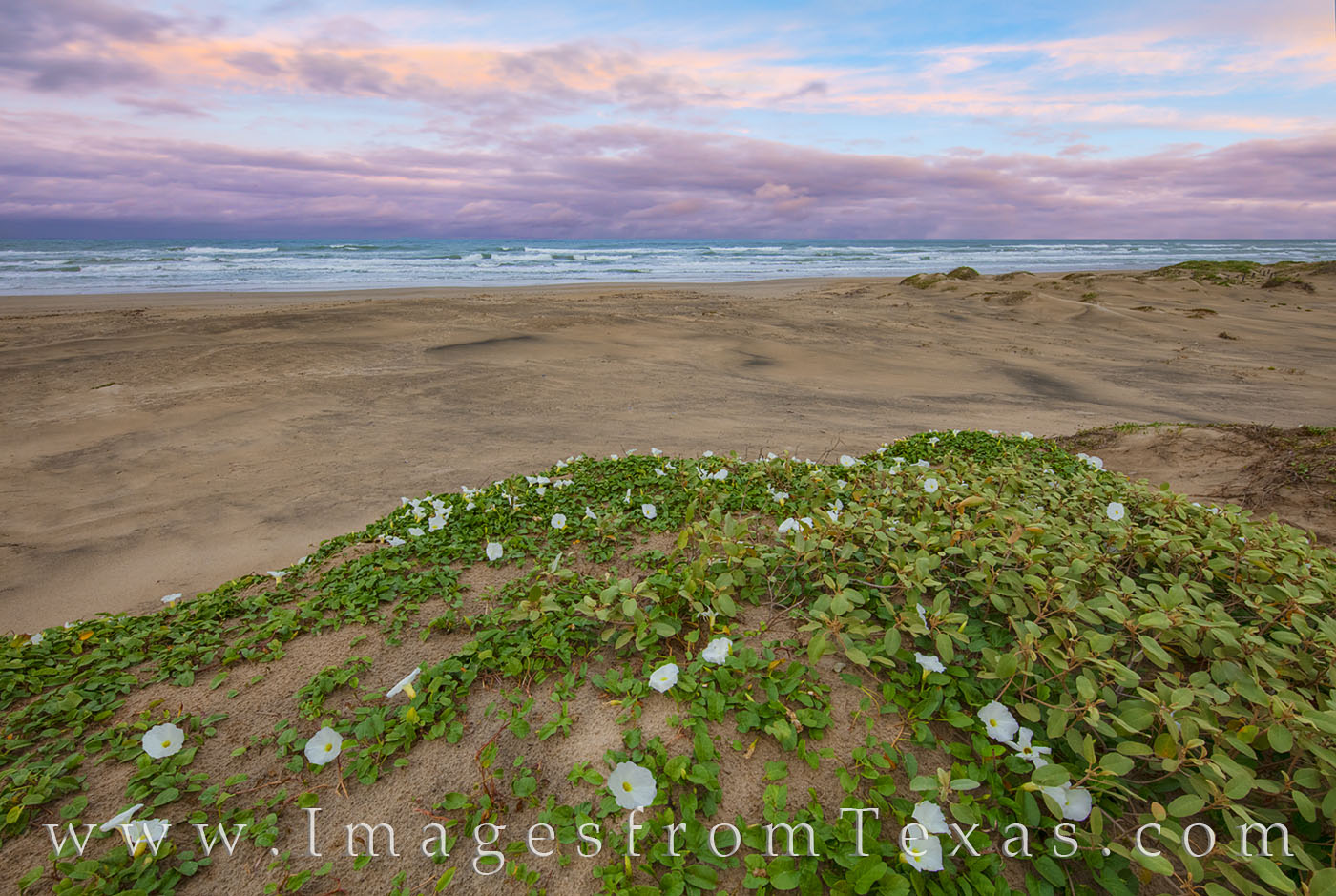 Texas coast, south padre island, south padre, gulf of mexico, morning glory, wildflowers, sand dunes, beach, sand, ocean, sunset, photo