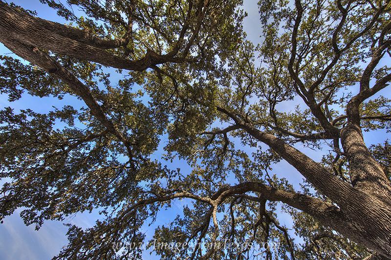 texas hill country,texas trees,texas sky,beneath the trees,beneath a tree., photo