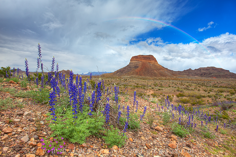 bluebonnet images,big bend bluebonnets,big bend prints,big bend national park,texas landscapes,texas wildflowers,rainbow, photo