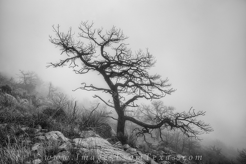 Big Bend prints,big bend national park,emory peak,black and white,texas images, photo
