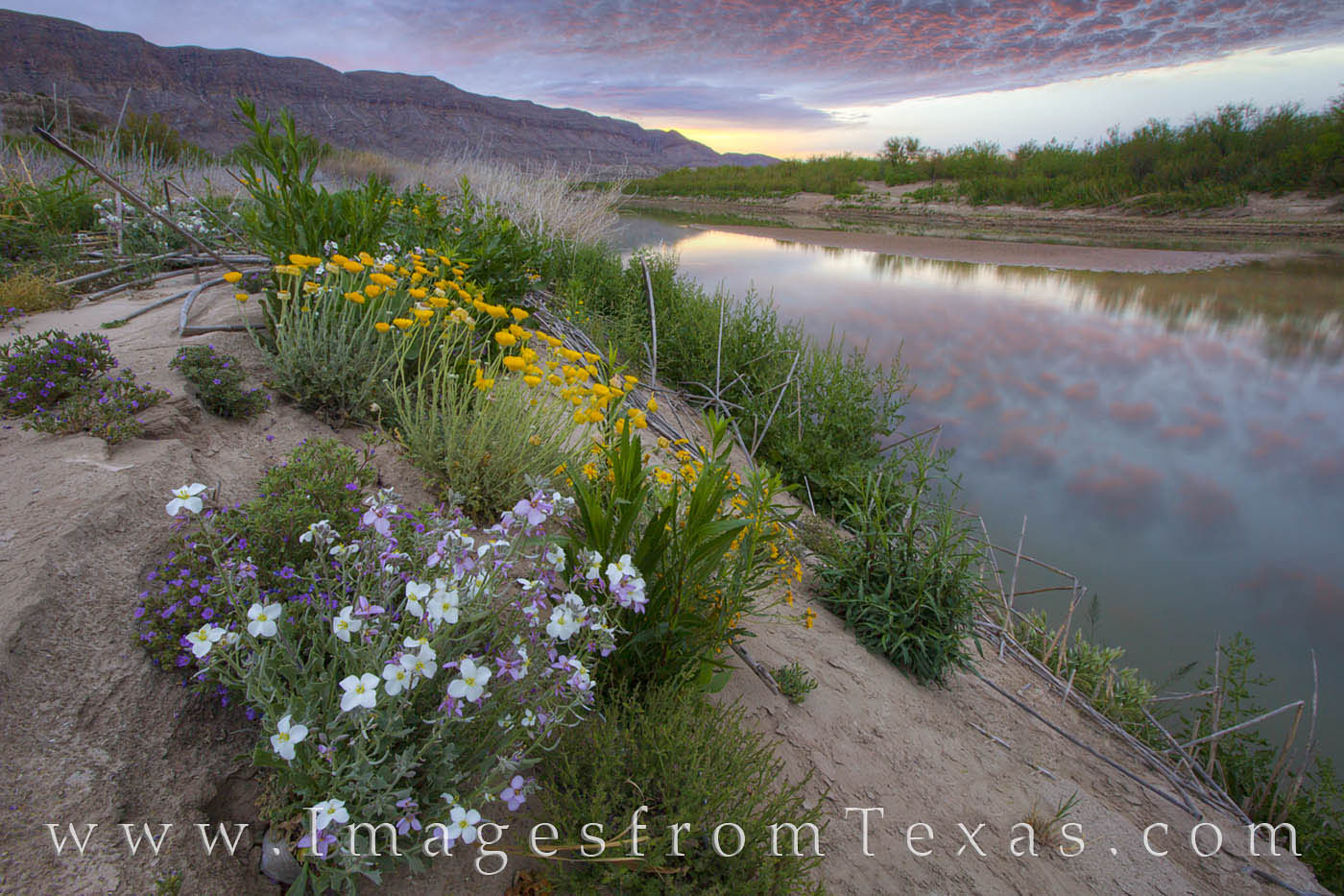 big bend national park images,big bend photos,rio grande,texas wildflowers,texas national parks,texas landscape,texas sunrise,texas prints,big bend wildflowers,big bend national park wildflowers, photo