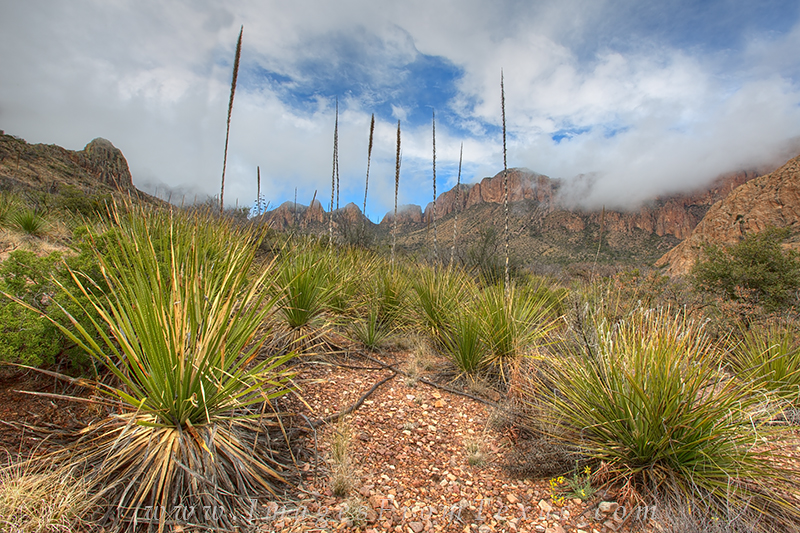 big bend national park,big bend landscapes,yucca,big bend prints, photo