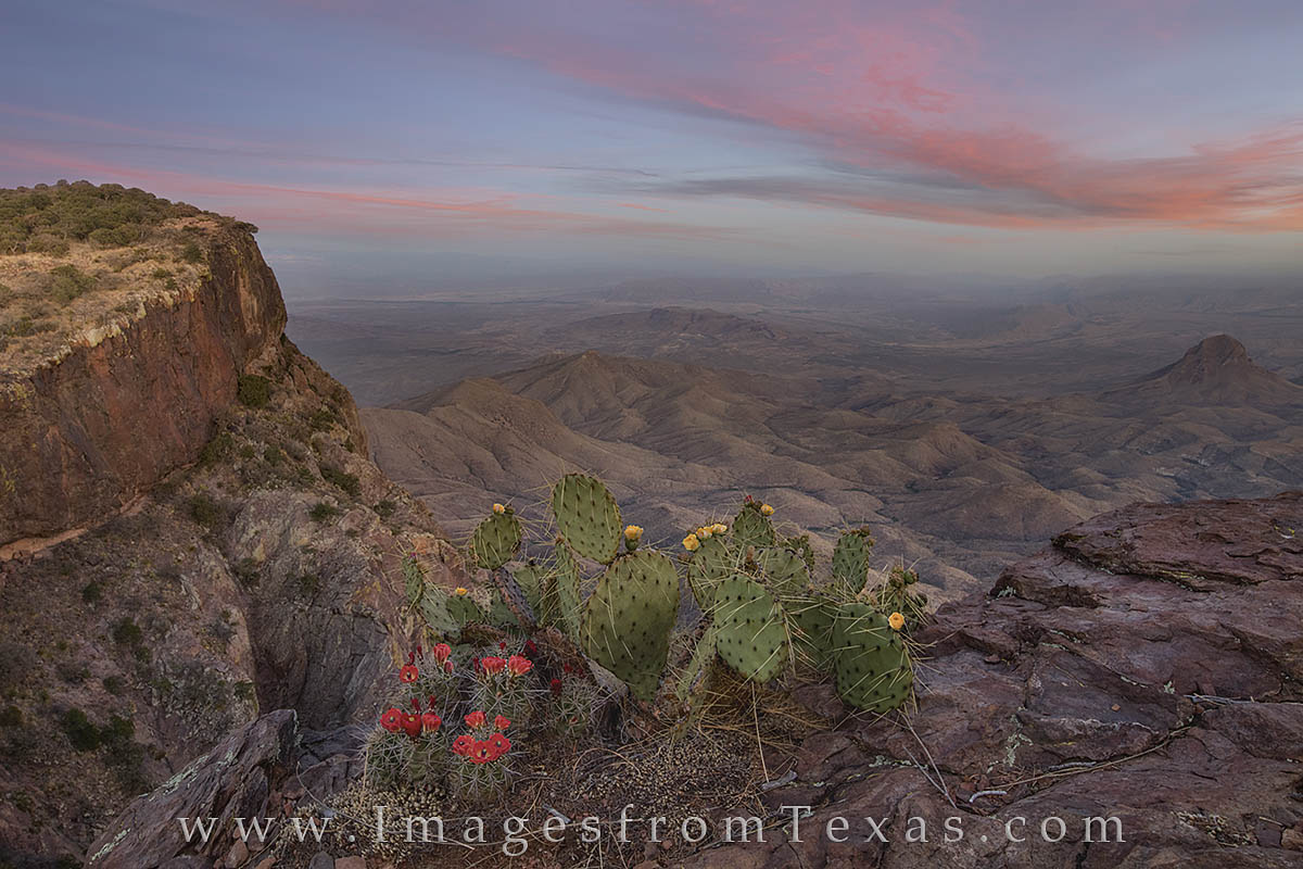 big bend national park, south rim, big bend images, claret cup cactus, prickly pear, texas landscape, texas sunset, south rim images, hiking texas, photo