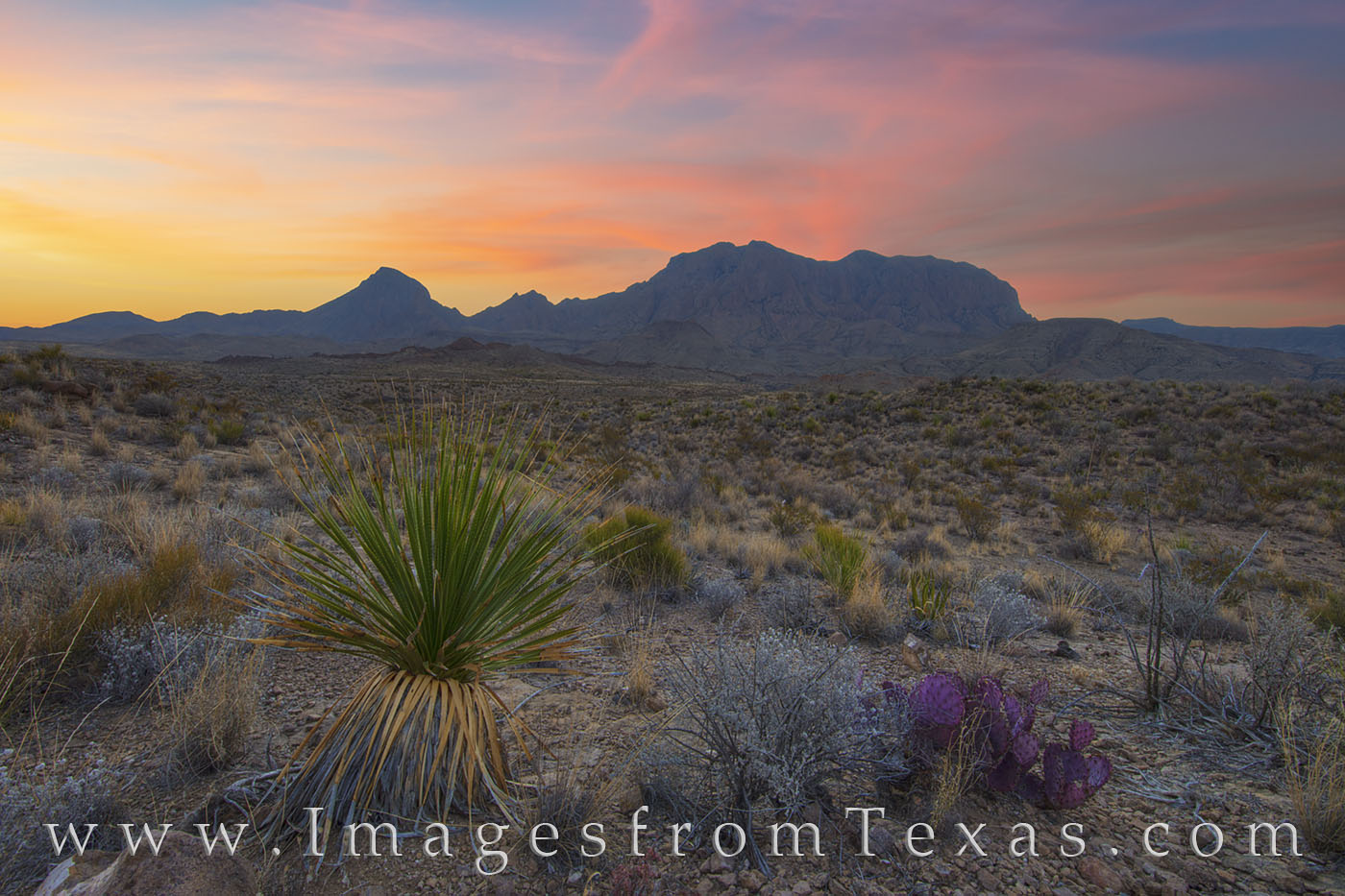 chisos mountains, sunrise, big bend, big bend national park, chihuahuan desert, desert, cacti, yucca, morning, west texas, photo