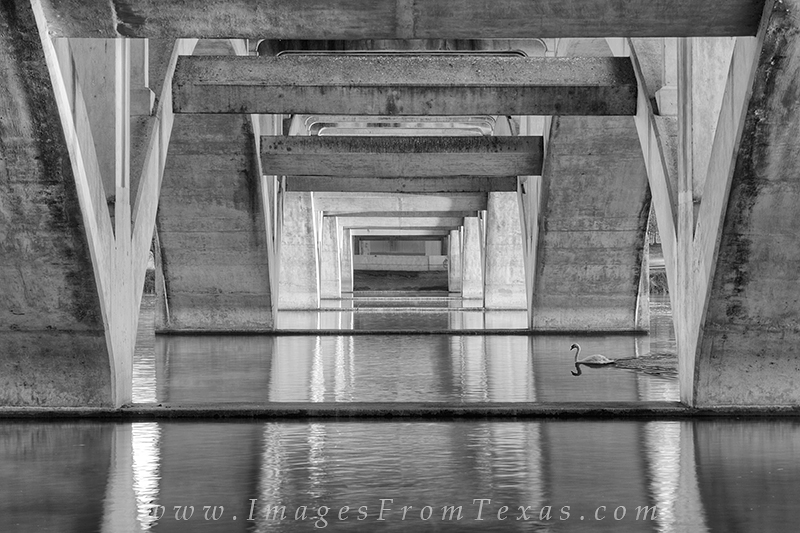 austin texas images,austin black and white,black and white photos,austin bridges,austin architecture, photo