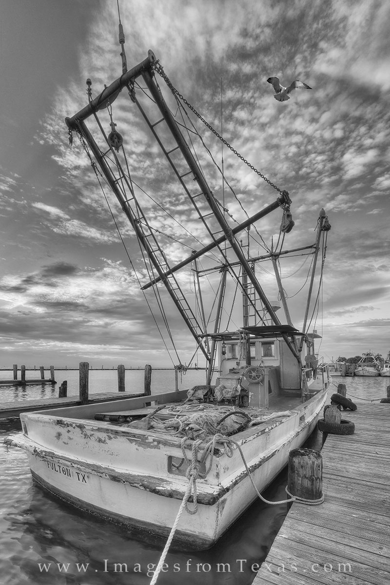 This shrimp boat in black and white was taken in the Rockport-Fulton Harbor along the Texas coast on a cool Fall morning. A seagull...