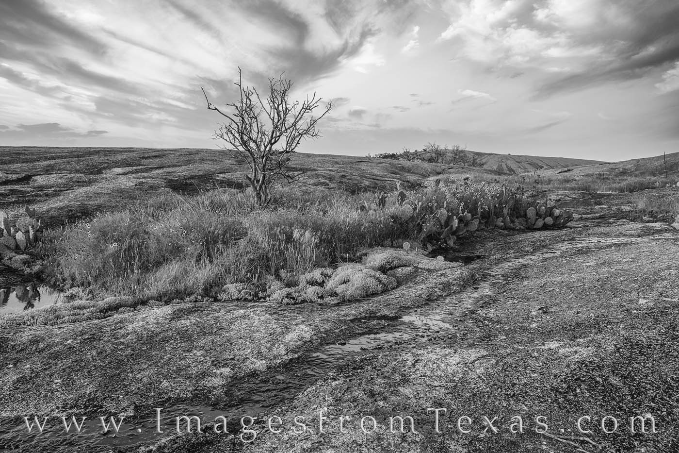 wildflowers, enchanted rock, hill country, state parks, spring, prints for sale, texas photos for sale, photo