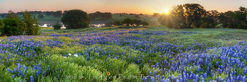 bluebonnet panorama,texas hill country photos,bluebonnet images,bluebonnet sunrise,texas landscapes, photo