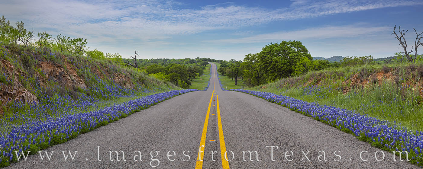 bluebonnets, texas wildflowers, panorama, bluebonnet prints for sale, hill country, county roads, ranch road, country road, spring, photo