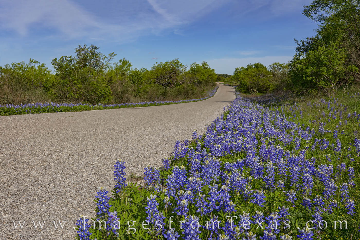 On a small county road between Round Mountain and Marble Falls, bluebonnets fill the shoulders with leading colors of blue.