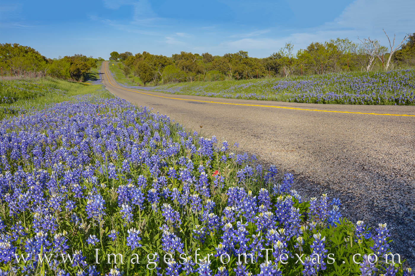 bluebonnets, highway, wildflowers, bluebonnet drives, hill country, county roads, ranch roads, spring, afternoon, photo
