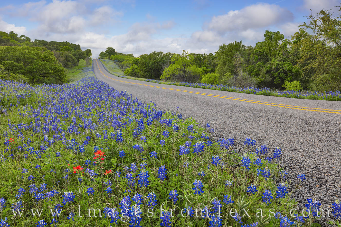 bluebonnets, county roads, ranch roads, wildflowers, paintbrush, hill country drives, afternoons, texas hill country, photo