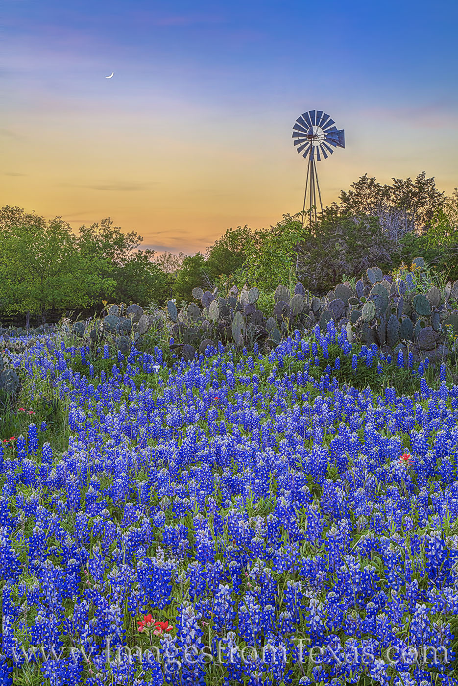 bluebonnets, bluebonnet roads, texas hill country, bluebonnet roads, backroads, exploring, green, escape, blanco county, johnson city, photo