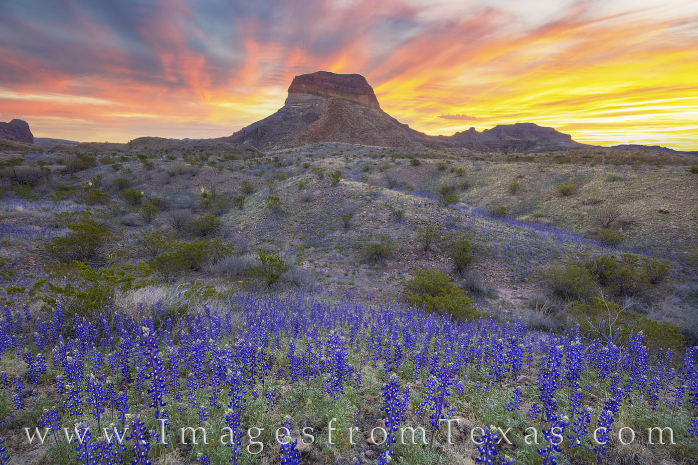 bluebonnets, big bend national park, chihuahuan desert, cerro castellan, sunrise, wildflowers, spring bloom, desert bloom, photo