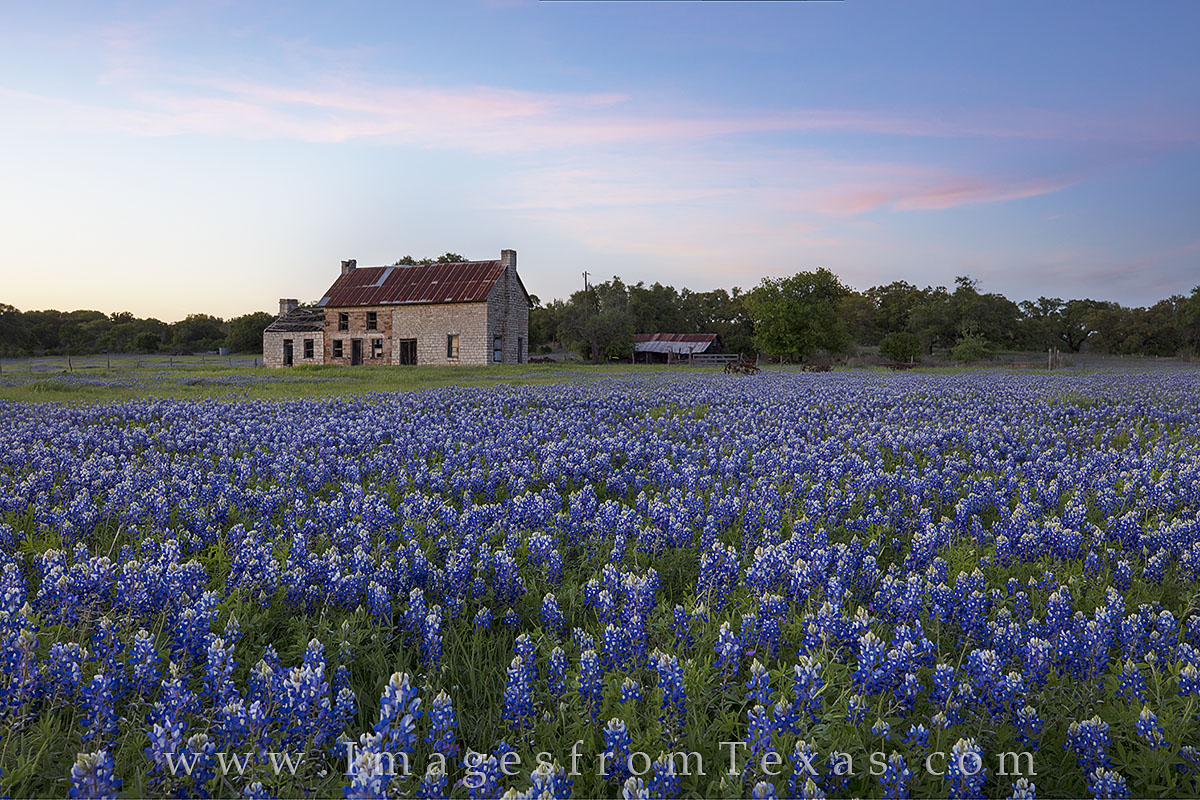 bluebonnet photos, texas wildflower images, texas wildflowers, bluebonnet prints, marble falls, bluebonnet house, texas hill country, texas sunset, photo