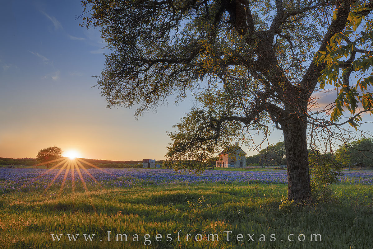 Seen through an old oak tree, the famous bluebonnet house in Marble Falls shows off a little of its color at sunset on a calm...