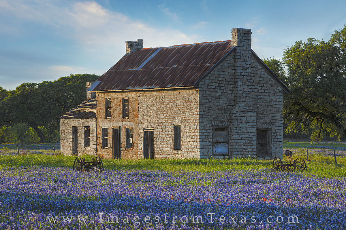 bluebonnet photos, texas wildflower photos, texas bluebonnets, bluebonnet house, marble falls, texas hill country, texas hill country prints, photo