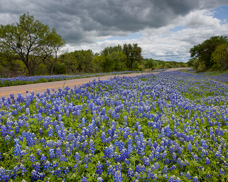 bluebonnet road,bluebonnet photos,bluebonnet highway,texas wildflowers,texas bluebonnets, photo