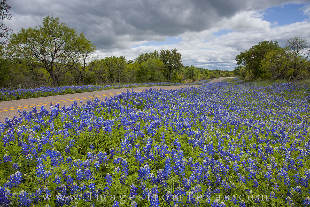 bluebonnet photos, bluebonnet prints, texas roads, texas hill country, mason texas, texas wildflowers, texas wildflower images, photo