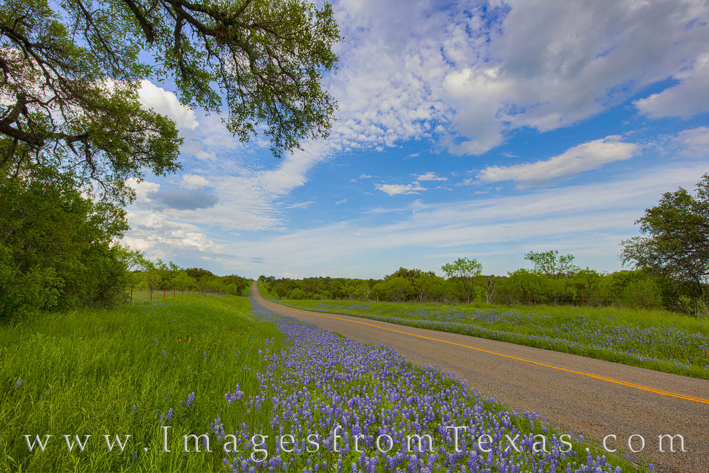 bluebonnets, county road, farm road, ranch road, hill country, afternoon, spring, photo