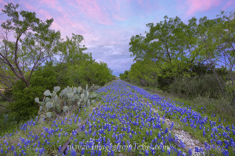 bluebonnet images,train tracks,texas wildflowers,bluebonnets,prints,texas landscapes,spring,wildflowers, photo