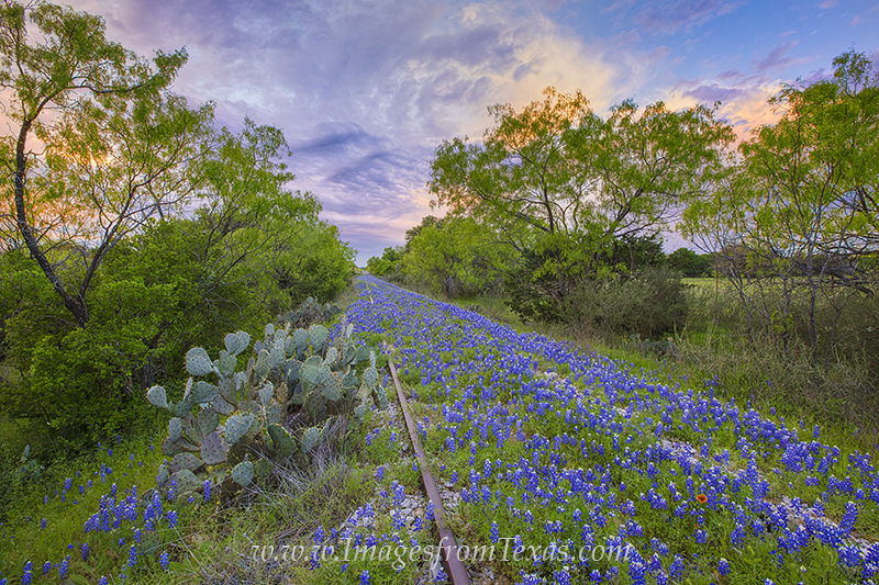 bluebonnets,traintracks,texas hill country,bluebonnet prints,train tracks,bluebonnet photos, photo