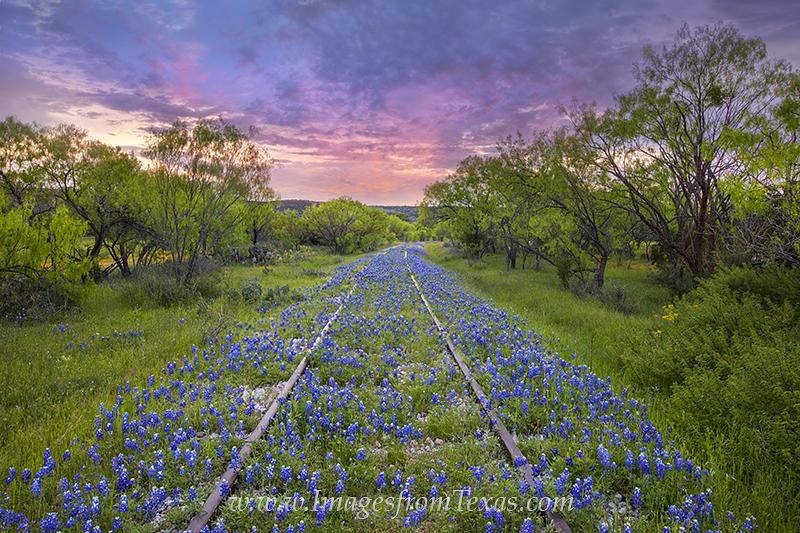bluebonnets,train tracks,texas wildflowers,bluebonnet prints,texas wildflower pictures,texas hill country,Kingsland,railroad, photo
