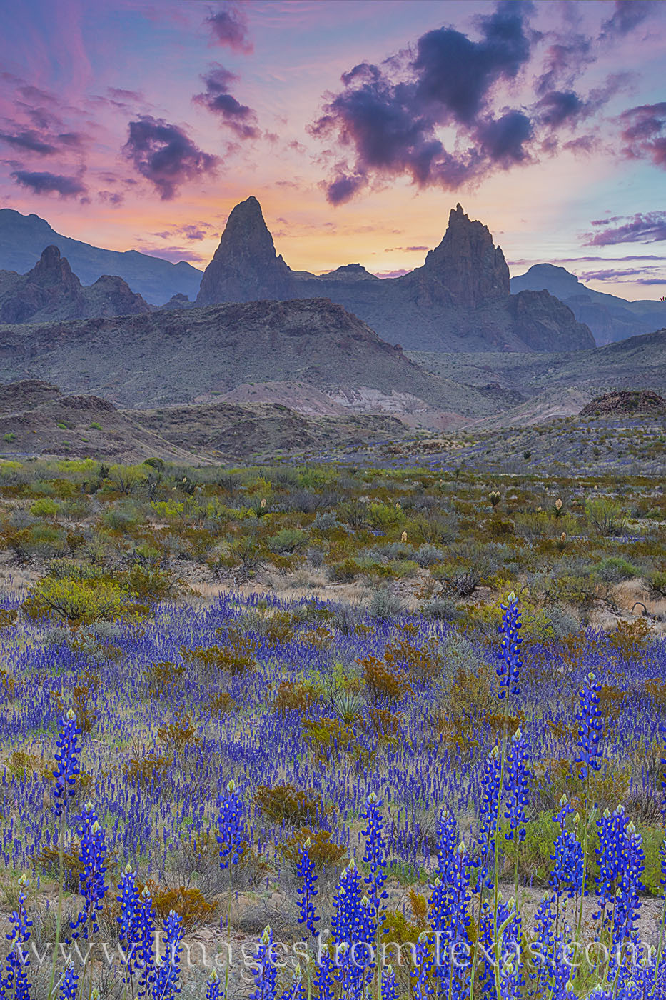 bluebonnets, wildflowers, big bend national park, mule ears, morning, sunrise, chisos mountains, spring, blue, orange, photo