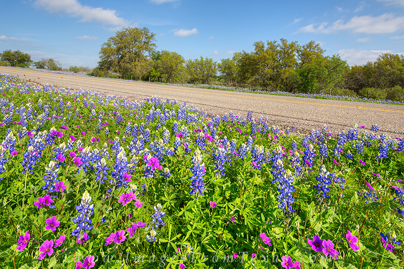 Texas country roads are wonderful to explore in April and May. Here, a vibrant display of wildfowers - stork's bill and bluebonnets...