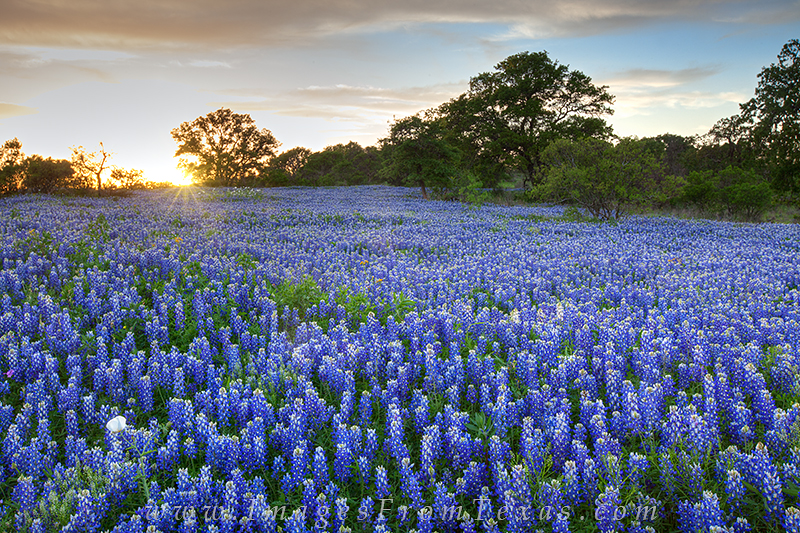 Storms had rolled through the area just a few hours prior to my arrival at this bluebonnet field on the edge of the Texas Hill...