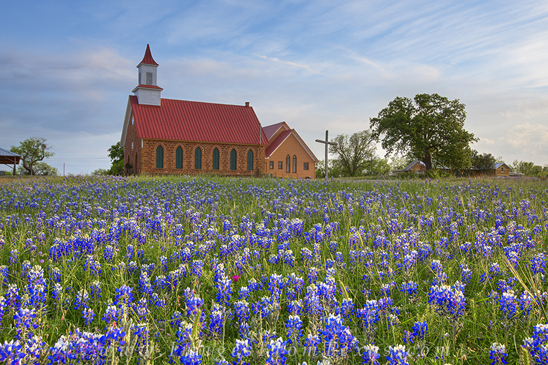 bluebonnet photos,bluebonnet prints,texas wildflowers,texas hill country,art texas, photo