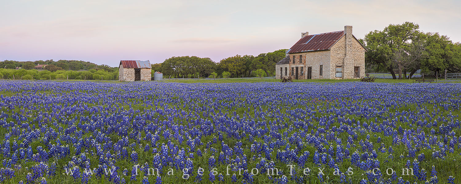 bluebonnets, texas bluebonnets, texas wildflowers, bluebonnet photos, bluebonnet panorarama, stone building, marble falls, marble falls, texas, texas landscapes, photo