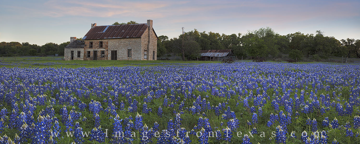 texas bluebonnets, bluebonnets, bluebonnet photos, marble falls, texas hill country, stone building, 281, texas wildflowers, photo