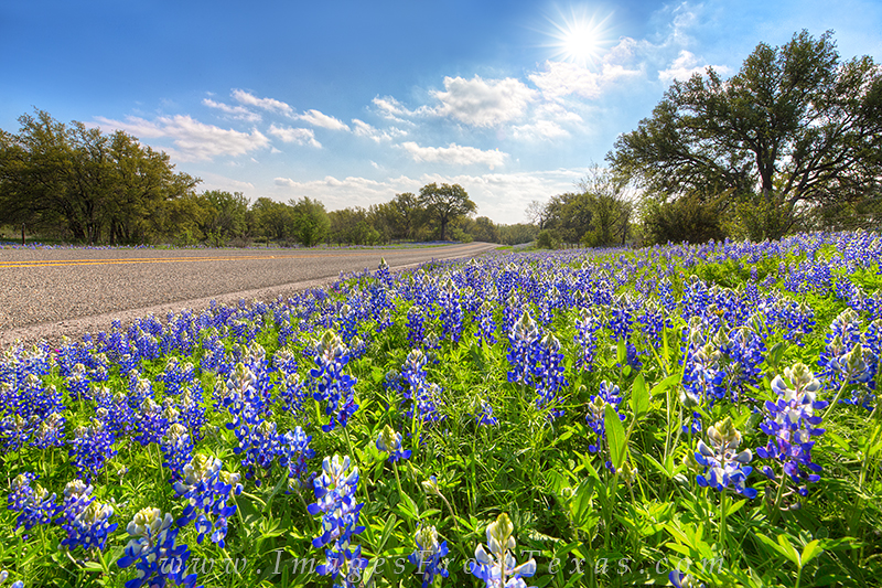 On a lonely Hill Country highway, bluebonnets fill the roadsides on an April morning as the sun warms up the day.